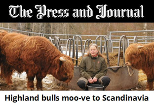 Highland bulls moo-ve to Scandinavia