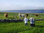 Innes, Lewis & James check out young heifers