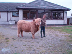 Reserve Cattle Champion of Champions was awarded to the yearling pedigree Highland heifer, Bella a' Ghlinne of Brue