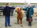 Calum Angus Mitchell and Cattle Judge Ena MacNeill, with Sine a' Ghlinne of Brue